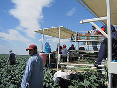Trabajadores en el rancho Stamoules Produce en Mendota, CA. Foto: Farida Jhabvala Romero