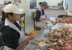 Trabajadoras H-2B de la industria marisquera