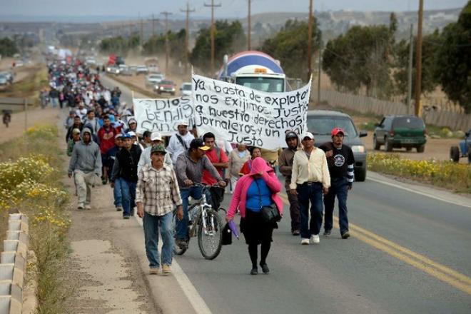 Durante las jornadas o marcha de San Quintín a la capital del estado, Mexicali, BC