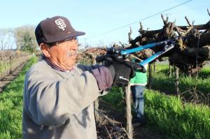Esta semana será llevada a votación, el proyecto de ley AB2757 que pretende que los trabajadores del campo puedan cobrar horas extras después de las ocho horas de trabajo por día, o las 40 horas laboradas a la semana. (Foto cortesía de Luis Magaña).
