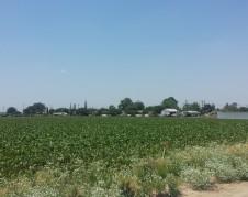 Campos agrícolas a un lado de las casas en las afueras de Lamont.