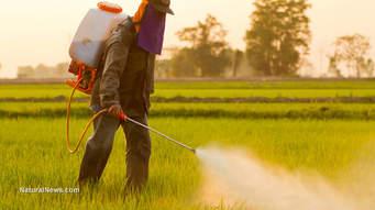 Fumigando con herbicida. Foto: www.naturalnews.com
