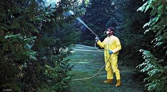 Rociando pesticidas con Cloropirifos en un huerto frutal del Valle Central de California. Foto: www.digitalimage.com