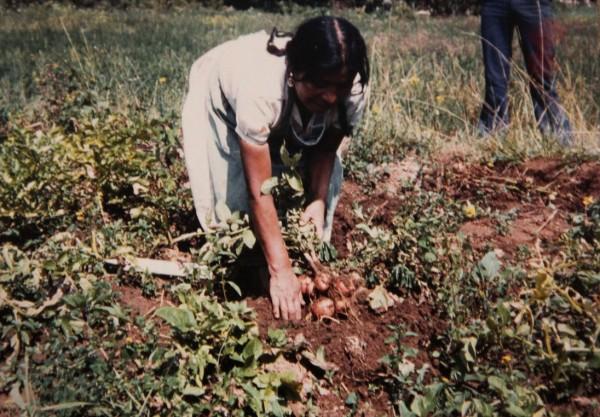 Con la reducción de insecticidas químicos, los controles biológicos de plagas se han recuperado y contribuyen a la estrategia de control de plagas. Este es un campo de cultivo de agricultura sustentable en una comunidad indígena de México. Foto: CEDICAM.