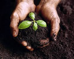 Agroecologia. Foto: Wix.com.