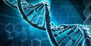 El genoma humano, más allá del código genético | El Heraldo El Heraldo