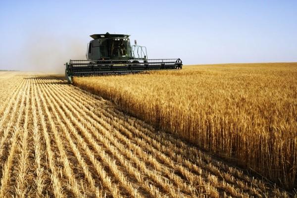 Producción de trigo en América del Norte, los mejores países productores de trigo en el mundo. Foto: WorldAtlas.com