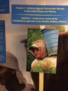 Trabajador agrícola en los campos de tomate de La Florida, captado en plena acción en la foto colgada en una columna informativa de la exhibición, en uno de las paredes de la carpa. Foto: MVG.