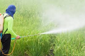 Monterey Bay Partisan4272 × 2848Search by image farmer spraying pesticide in the rice field