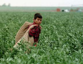 Migrant Farmworkers: CQR CQ Press Library288 × 224Search by image Eleven-year-old C