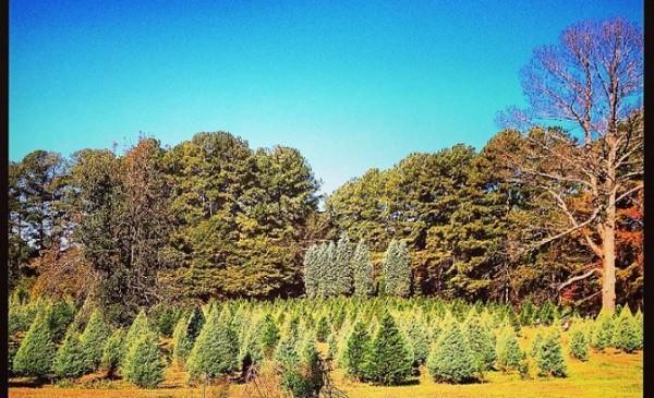Sembrando nuevos árboles, Foto: www.cokertreefarm.com