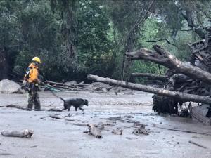 Rescatista con perro en busca de víctimas desaparecidas. Foto:  www.abc13.com