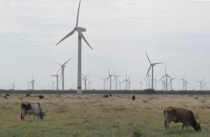 Mucha gente en el sureño estado mexicano de Oaxaca acusan a los parques eólicos de desplazar a la población local y quitar su manera de vivir de la agricultura.