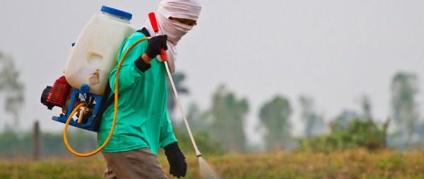 Campesino rociando pesticida en un campo de cultivo de cultivo. Foto; www.mailman.columbia.edu