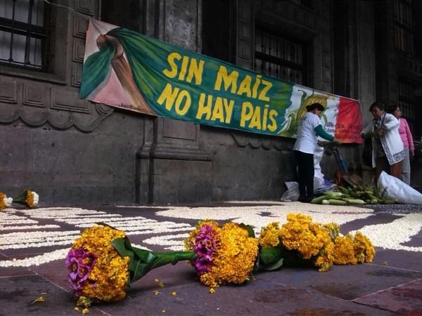 Manifestación del movimiento campesino mexicano, 'Sin Maíz No Hay País', frente a Palacio Nacional, en el Zócalo de la ciudad de México. En el primer plano, ramos de flores de Cempazúchitl, milenariamente usada en la Ofrenda de Día de los Muertos. Foto: Polemón.