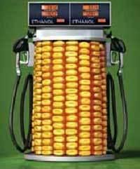 El maíz usado como combustible que sucedería al petróleo. Foto: Lourdes Edith Rudiño