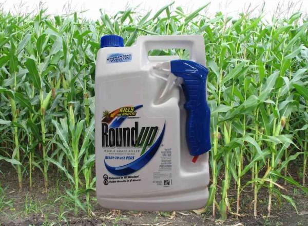 Este herbicida es de amplio uso en zonas agrícolas de la nación. Foto: GM-free.