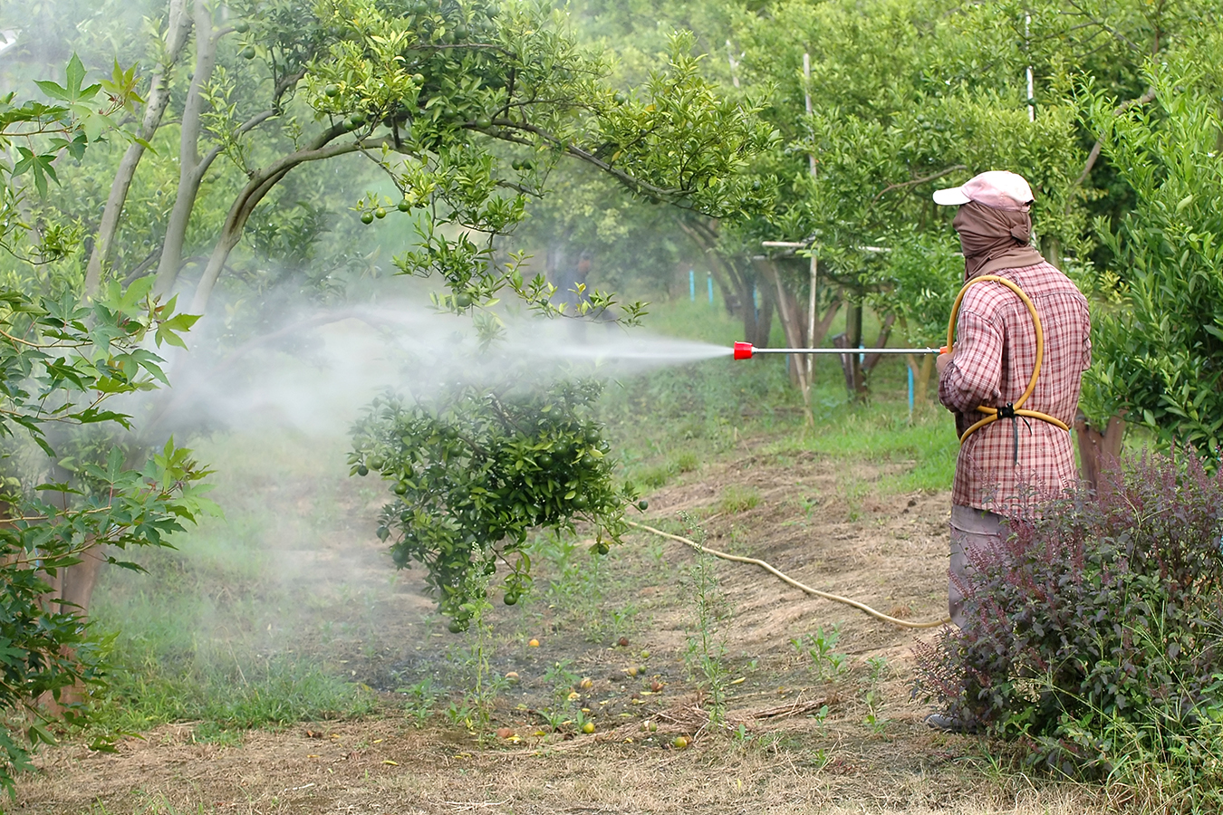 Campesino riega pesticida. Foto: iStock/Getty Images via California Healthline