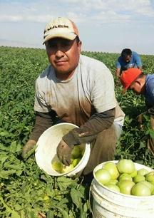 Rubén Montoya es un campesino que murió en el ejercicio de su trabajo en un campo agrícola del estado de Nueva York. Foto: ufw.org.