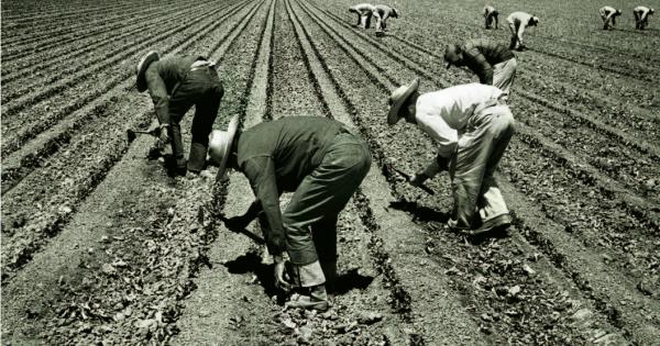 Trabajadores agrícolas mexicanos en los campos estadunidenses de cultivo entre los años 1940 al 46, conocidos como los Braseros. Foto: Cortesía de Raúl Silva.