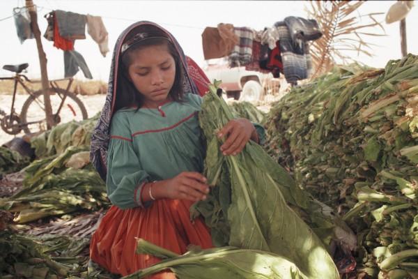 Niños trabajadores del campo son expuestos en un trabajo académico de reciente exposición en la  Conferencia Internacional sobre el Trabajo Infantil en la Agricultura celebrada en Washington DC. Foto: icanarise.wordpress.com.