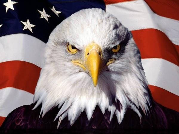 El Águila Calva, ave emblemática de Estados Unidos en peligro de extinción. Foto: www.wallpaperaccess.com.