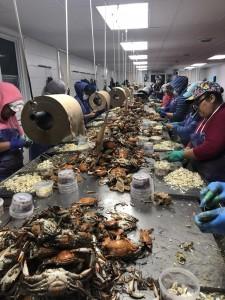 Trabajadoras migrantes con la visa de trabajo A-2A en Maryland.
