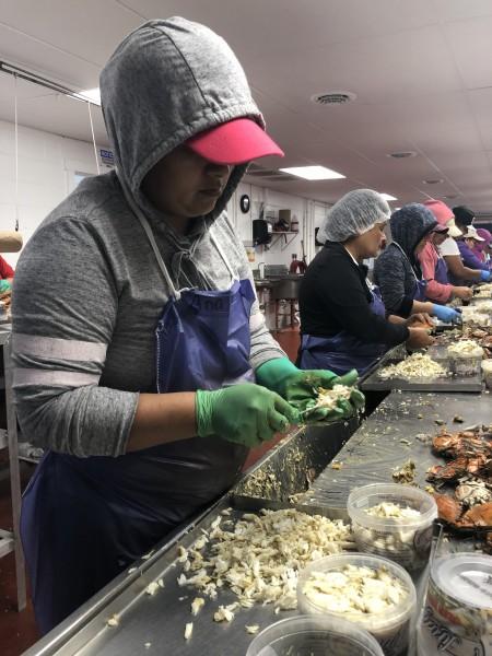 Trabajadora temporal, migrante mexicana en una empresa de Marylad dedicada a la venta de la carne del cangrejo.
