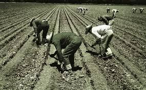Trabajadores agrícolas del periodo del Programa Bracero, el convenio entre México Y Estados Unidos y el mayor convenio de este tipo en el mundo de la postguerra.