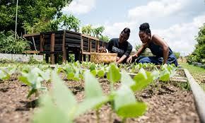 Mujeres negras se organizan para cultivar huertos comunales donde sembrar alimentos frescos y de buena calidad. Foto: Food Bank.