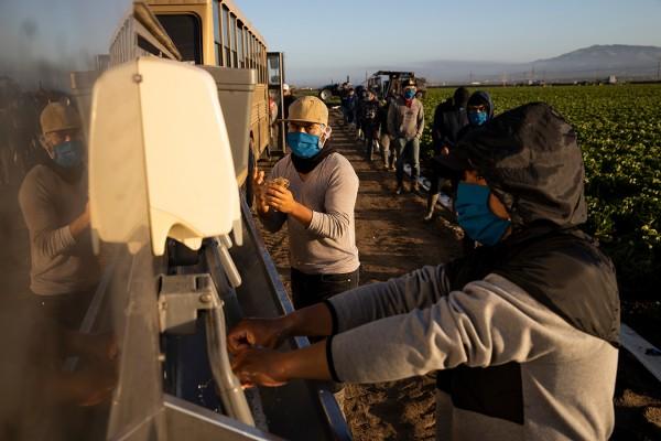 Trabajadores latinos en la industria agrícola de California, que genera una parte importante del PIB californiano. Foto: https://khn.org.