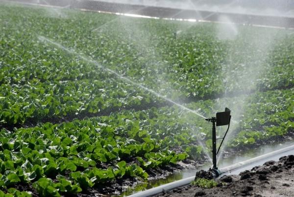 La agroindustria en California cuenta con vastos sistemas de riego en los campos de su propiedad. Foto: Departament fo Water Resources.