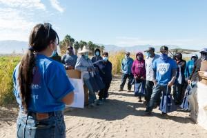 Campesinos en temporada de cosecha y empaque de pimientos en el Vale de Coachella escuchan a Montserrat Gómez explicarles los beneficios de la vacuna.