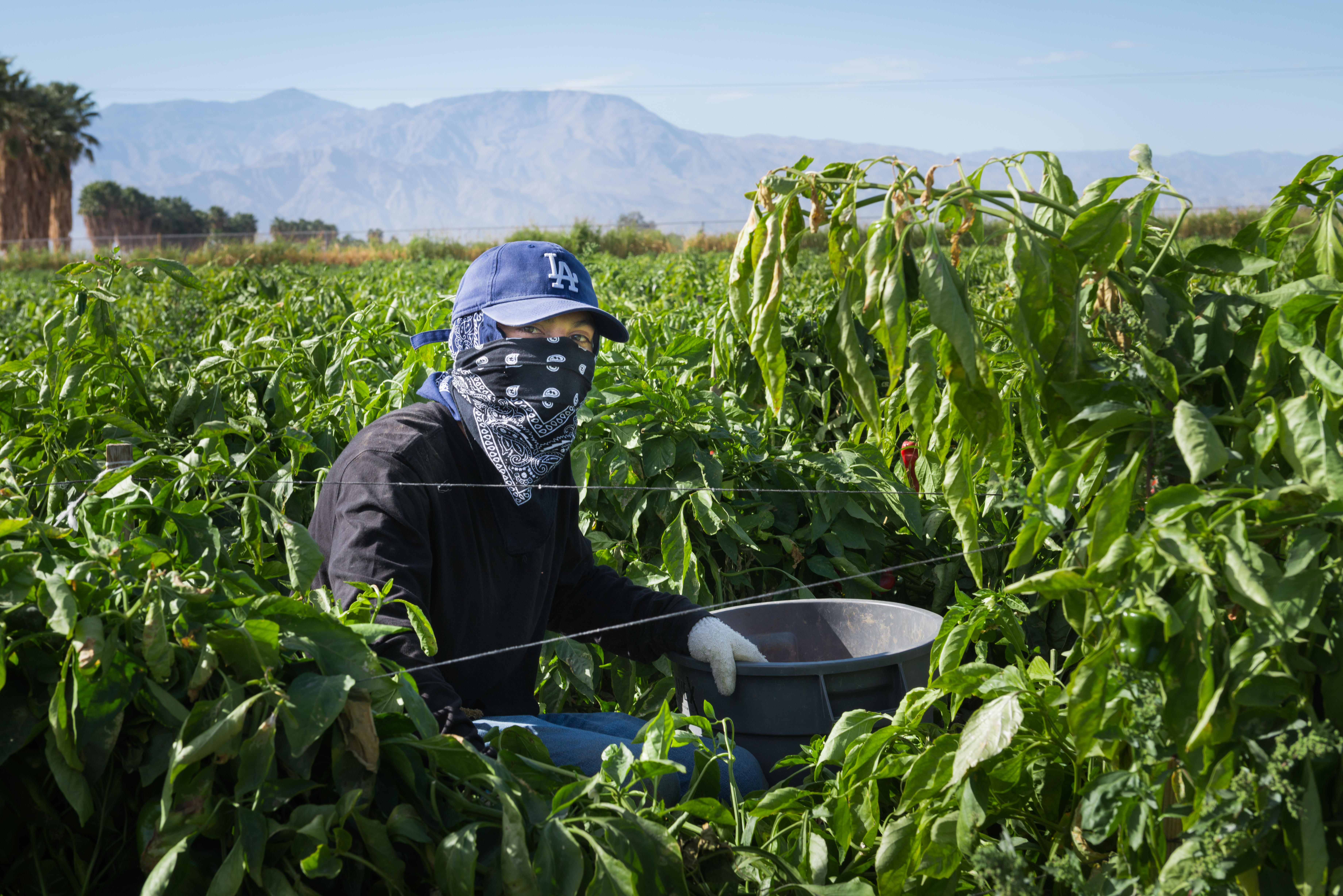 Farmworker Erwin Sandoval, 21, had been skeptical about getting the vaccine because he feared the potential side effects, but he reconsidered after learning that friends his age back home in El Salvador had died of covid.
