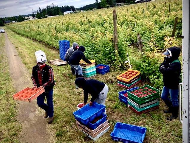 Trabajadores agrícolas del valle del Río Skagit, estado de Washington. Foto: Cortesía de Familias Unidas por la Justicia.