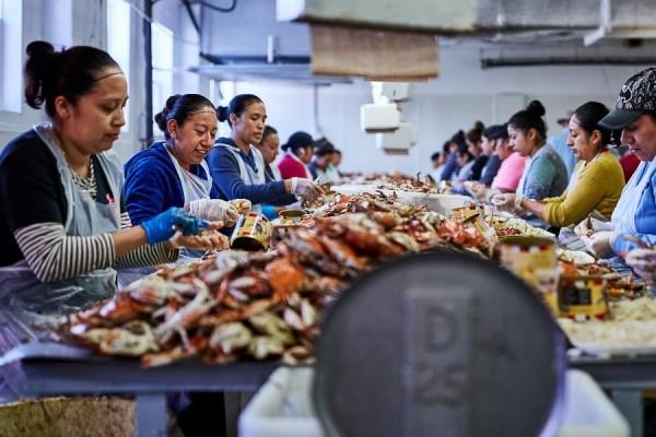 Trabajadoras de la industria de la jaiba en Maryland, mayormente mexicanas. Foto: https://thelocalpalate.com.