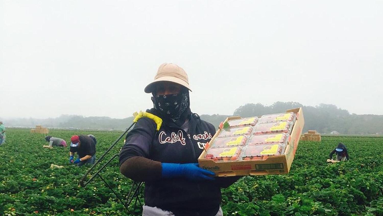 Foto: https://farmworkerfamily.org.
