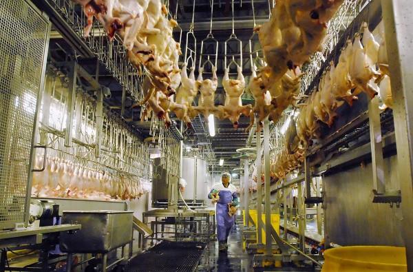 Trabajador de planta procesadora de carne avícola sin cubre boca a la hora del trabajo. Foto: https://www.oxfamamerica.org.