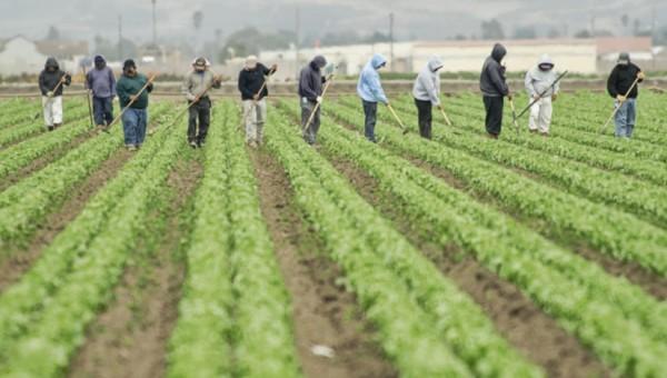 Un día de faena en los campos agrícolas de colorado. Foto: https://www.foodsafetynews.com.