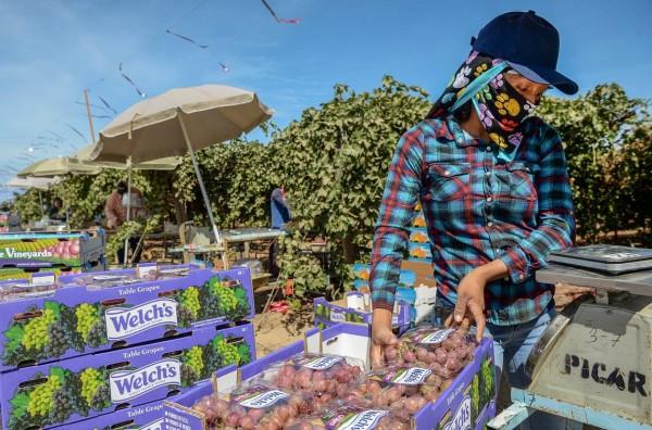 """""""No queremos una ley que nos dé máscaras, queremos una ley que nos dé derechos"""", dijo un trabajador agrícola (foto de archivo de Bee). CRAIG KOHLRUSS ckohlruss@fresnobee.com"""
